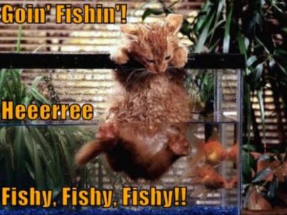 cat-fish-funny-animal-humor-jpg