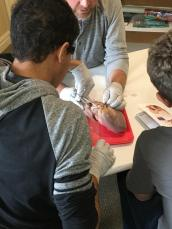 Boys Dissecting a heart 2